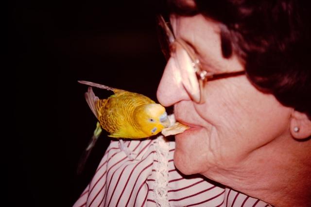 Grandma and the bird